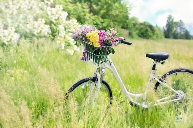 велосипед с корзиной цветов в поле