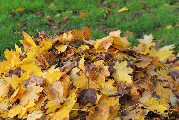 куча листьев