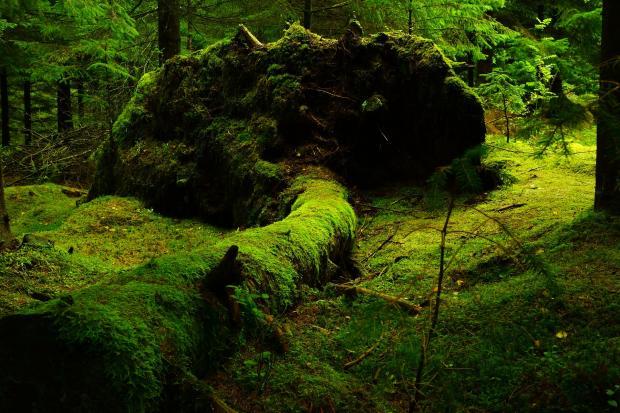 лес, низина, мох