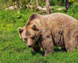 17-летняя американка защитила собак от медведя: видео стало вирусным в сети