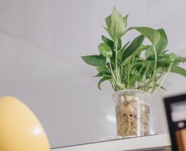 3 красивых и неприхотливых в уходе комнатных растения