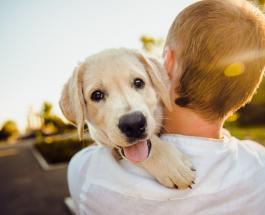 12 пород собак - отличный выбор для неопытных любителей домашних животных
