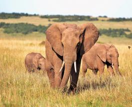 Нападение слона на легковой автомобиль снял на видео авторегистратор