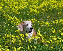 Почему собаки едят траву: 5 возможных причин