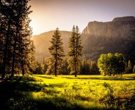 12-летний житель Германии нашел в лесу меч возрастом более 400 лет