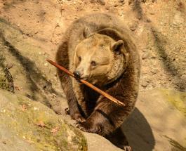 Операция по спасению молодого медведя с высоковольтного столба попала на видео