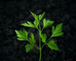 Как правильно хранить зелень, чтобы она оставалась свежей и полезной