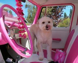 Путешествие на автомобиле с собакой: 7 советов для комфортной поездки хозяина и питомца