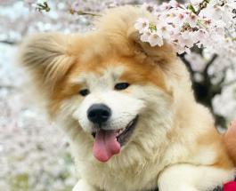 Забавные фото животных: пес по кличке Боб стал звездой сети благодаря пушистым ушам