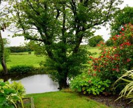 3 растения, которые отпугнут с садового участка клещей