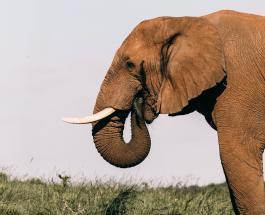 Неожиданный гость: жительница Таиланда обнаружила слона на собственной кухне