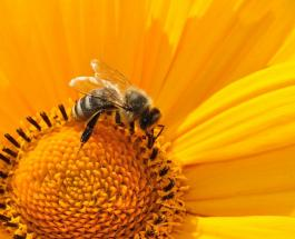 Что делать, если укусила пчела, и как избежать опасности при встрече с насекомыми