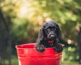 Почему собаки любят кататься в грязи и можно ли отучить питомца от вредной привычки