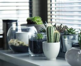 Как перекись водорода может помочь спасти умирающие комнатные растения