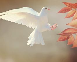 В Британии загадочным образом пропадают голуби: что говорят эксперты