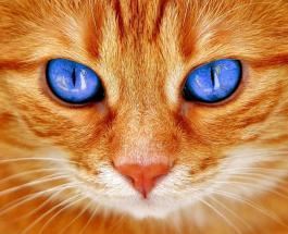 Как помочь кошке пережить летнюю жару: 5 полезных советов