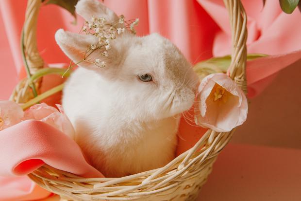 игрушечный кролик в корзинке с цветком