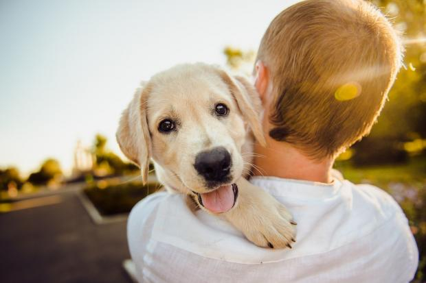 собака на плече человека