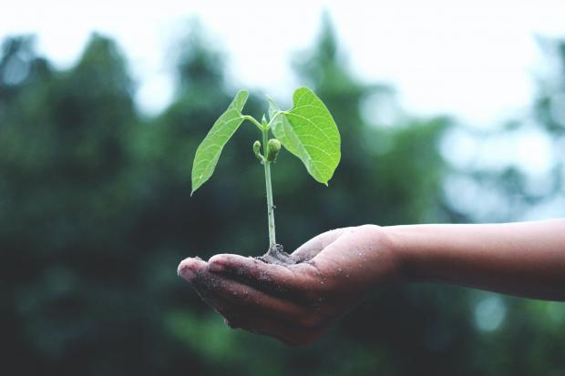 зеленый росток с землей в руке