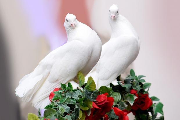 сидят два белых голубя на свадьбе