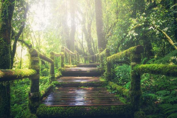 деревянная лестница в лесу