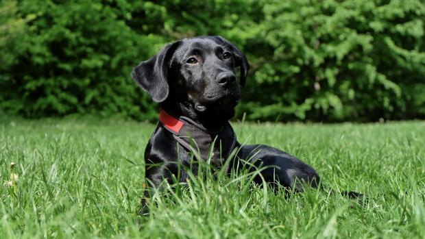 собака в высокой траве