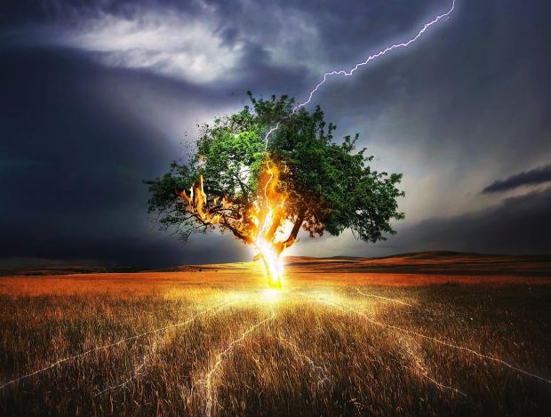 в одинокое дерево ударила молния