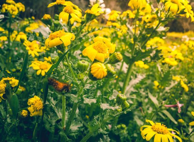желтые цветы на поле