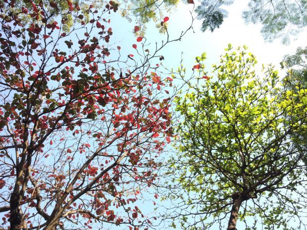 дерево с красными листьями и дерево с зелеными листьями