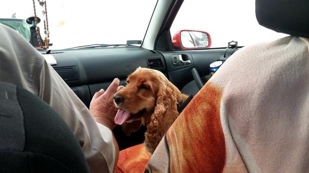 мужчина гладит собаку в автомобиле