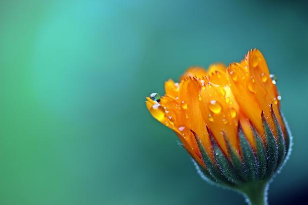 яркий оранжевый цветок