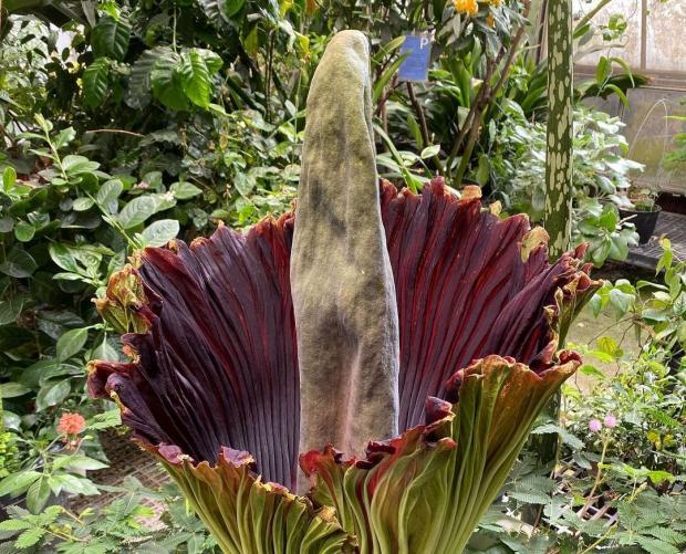 редкий цветок