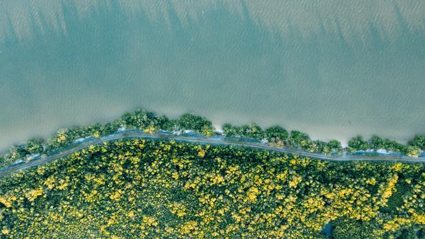 цветущие растения у береги моря или океана