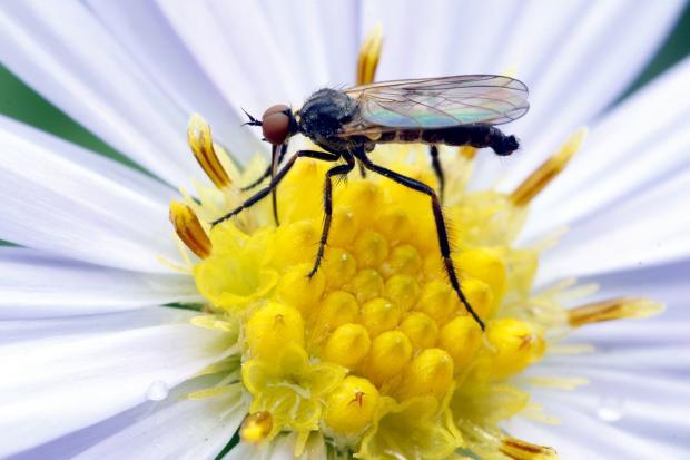 комар сидит на ярко-желтом цветке