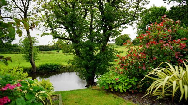 зеленые растения в саду
