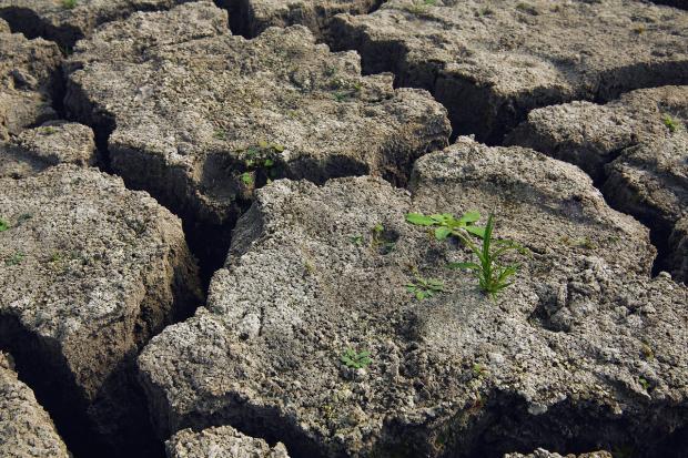 сухая почва с трещинами