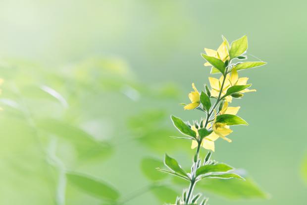 желтый цветок на зеленом поле