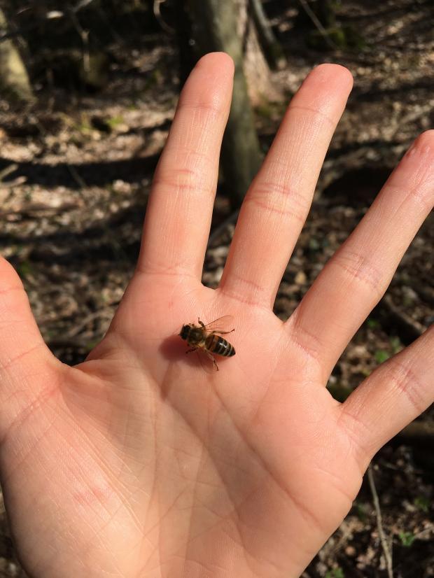пчела сидит на ладони человека