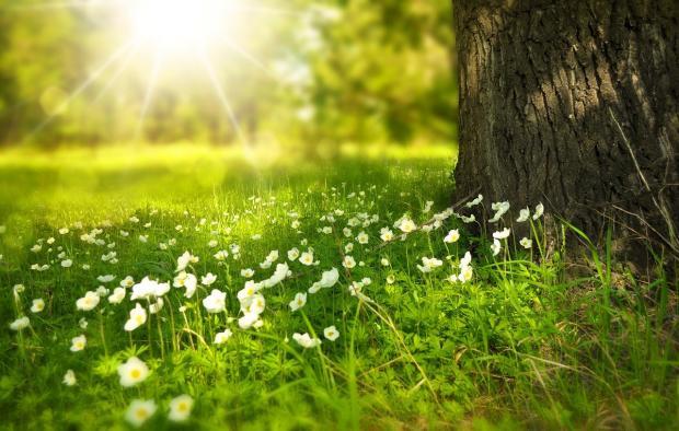 солнце встает над зеленым лугом