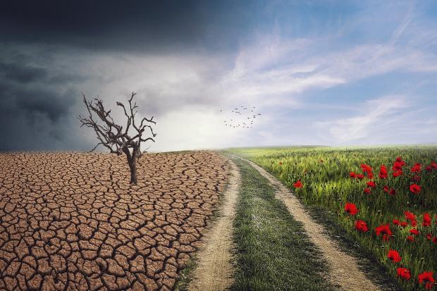 дорога разделяет засохшую землю и цветущий луг