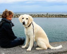 Всемирный день собак 2 июля: ТОП-5 фильмов с животными в главной роли