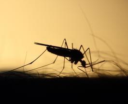 ВОЗ объявила Китай 40-й страной мира, полностью свободной от малярии