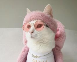 Забавные фото животных: коты и собаки в стильных нарядах