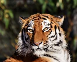 В зоопарке Сан-Франциско начали вакцинацию животных от коронавируса