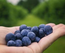 5 низкокалорийных продуктов, которые помогут похудеть летом