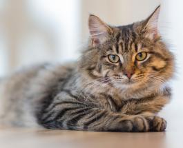 5 жизненных уроков, которые может преподать человеку кошка