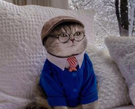 Из уличного кота в звезду соцсетей: история и фото красавца Бенсона