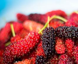 Лето — сезон шелковицы: чем вкусная ягода полезна для здоровья