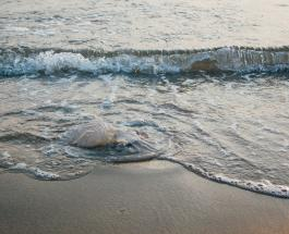 Медузы заполонили побережье Азовского моря: фото и видео с пляжей курортных районов