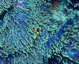 Ученые бьют тревогу: отходы с кораблей убивают коралловые рифы в морях и океанах